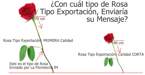 Rosas Tipo Exportacin en Bogota a Domicilio